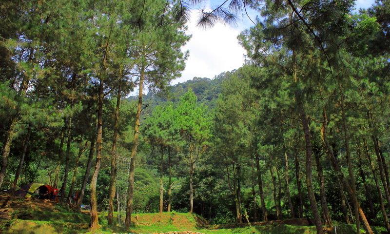 Hutan di bumi perkemahan bogor camp ciputri